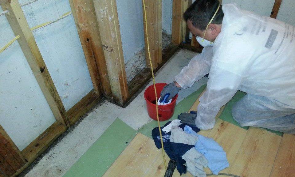 Mold Fungicide Treatment