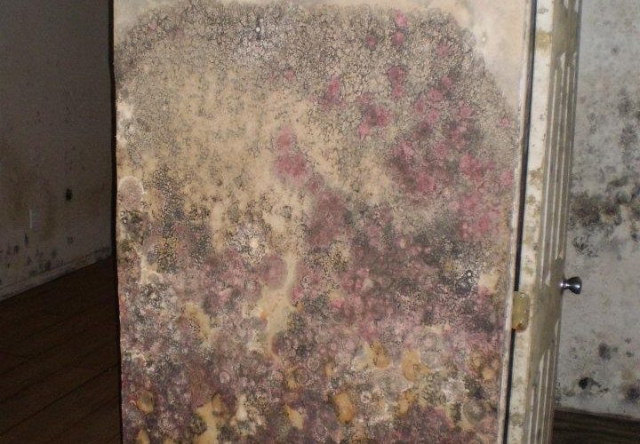 Extreme Mold on wall of home